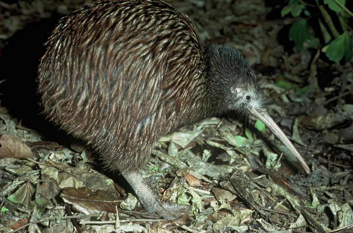 common kiwi names