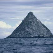 Chatham Island mollymawk. The Pyramid is the sole breeding site. The Pyramid, December 1987. Image © Alan Tennyson by Alan Tennyson