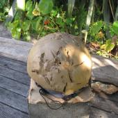 New Zealand falcon. Strike imprints of female bush falcon on clay 'helmet'. Eastbourne, Wellington, November 2011. Image © Richmond Atkinson by Richmond Atkinson