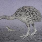 Upland moa. Adult with tuatara (495 x 700mm watercolour and watercolour pencil on paper). South Island. Image © Paul Martinson by Paul Martinson