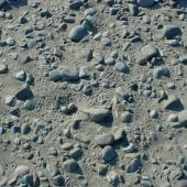 Wrybill. Nest with eggs and footprints. Upper Rangitata River, September 2005. Image © Nicholas Allen by Nicholas Allen nick_allen@xtra.co.nz