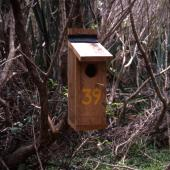 Forbes' parakeet. Nest box located in Douglas Basin. Mangere Island, December 2000. Image © Terry Greene by Terry Greene