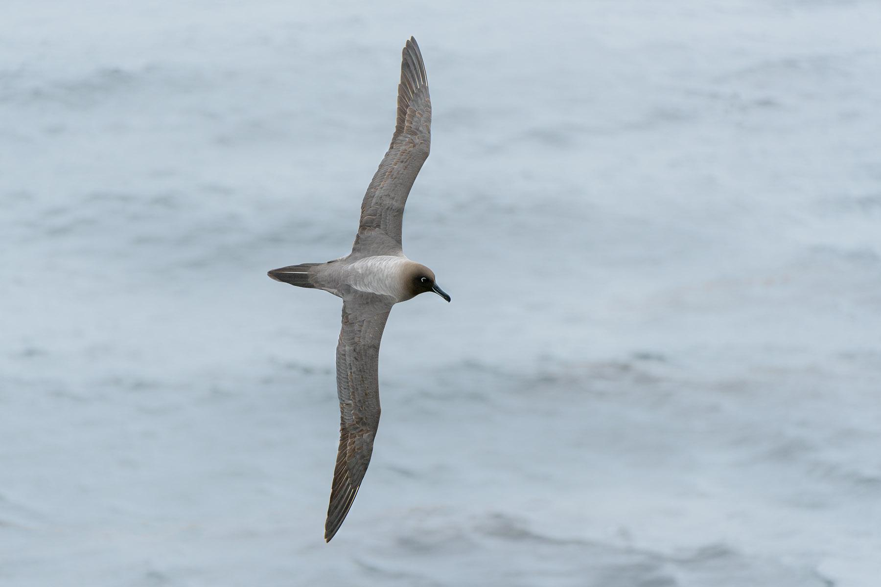 eye of the albatross pdf